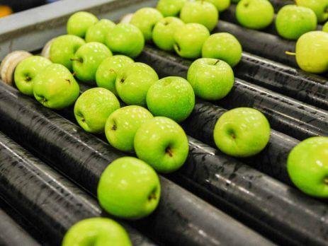 جداسازی میوه ها